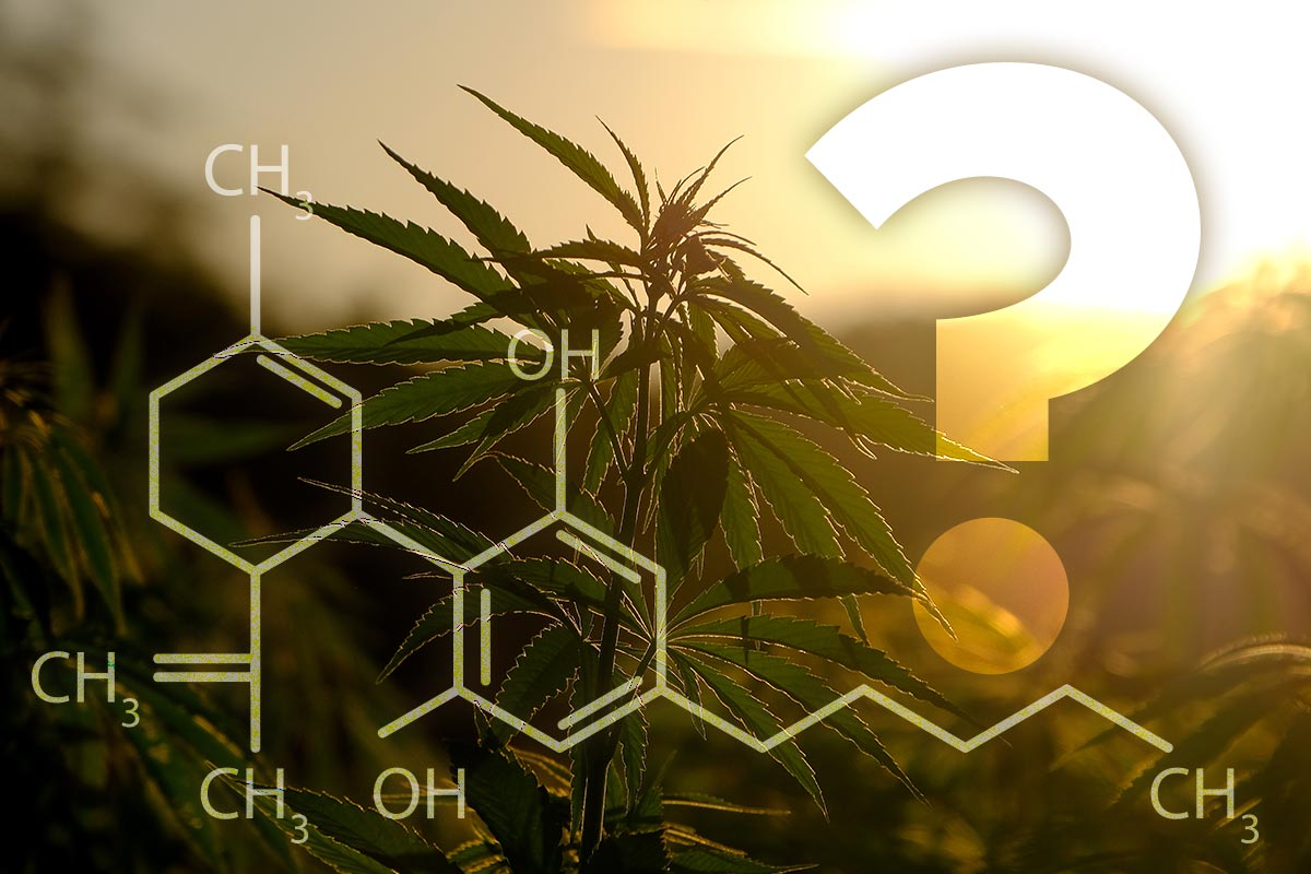 What's the deal with CBD