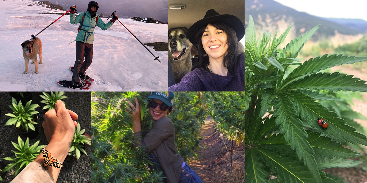 Five Questions with Jenn Procacci of WildLand Cannabis