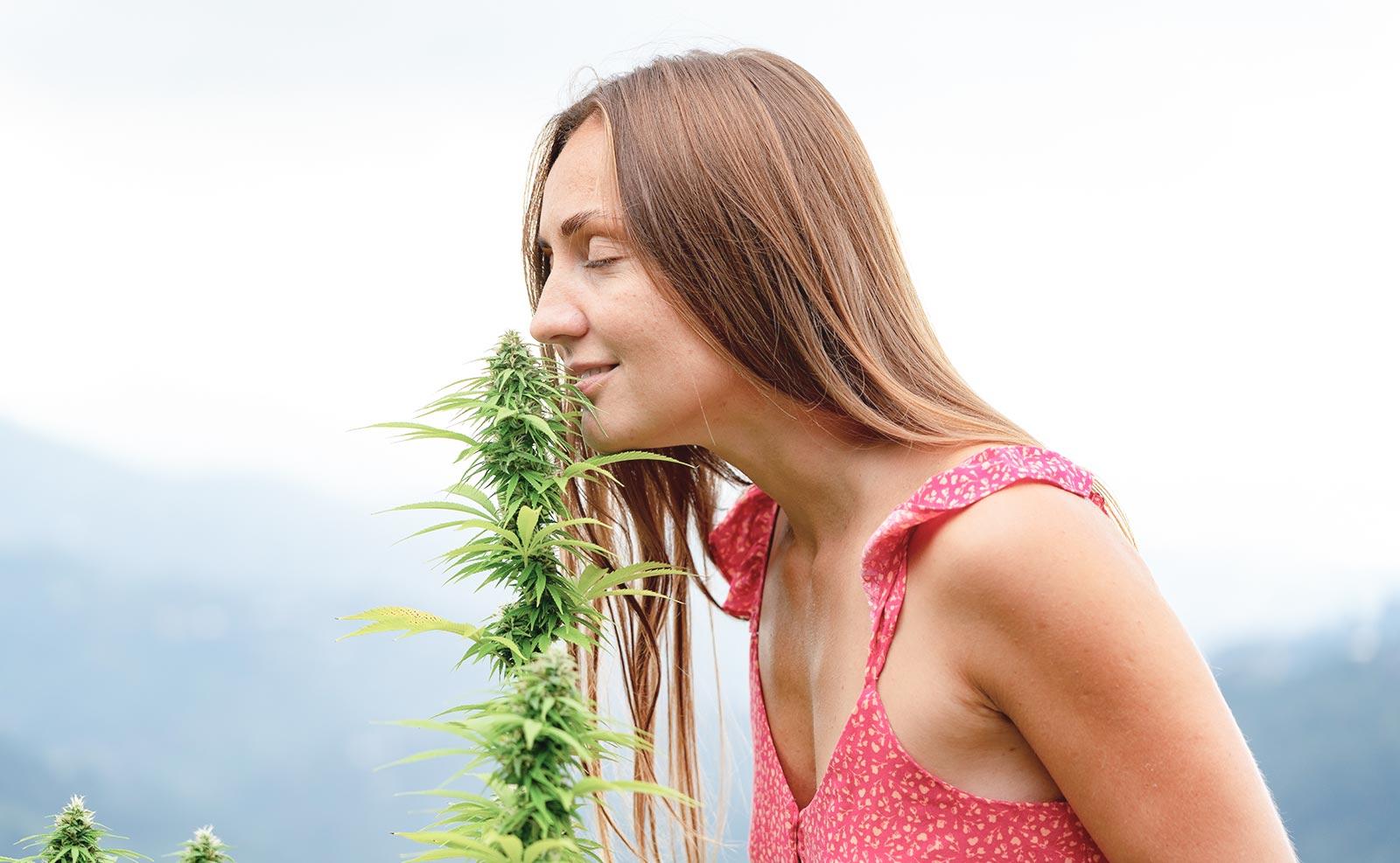 Choosing Cannabis