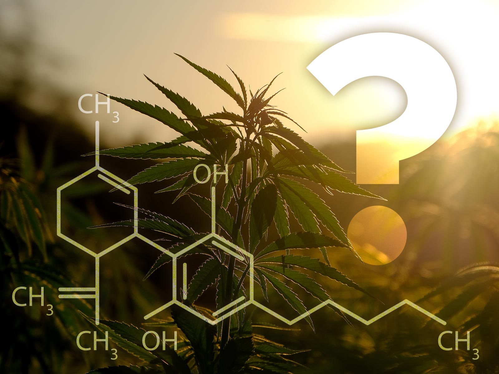What's the deal with CBD?